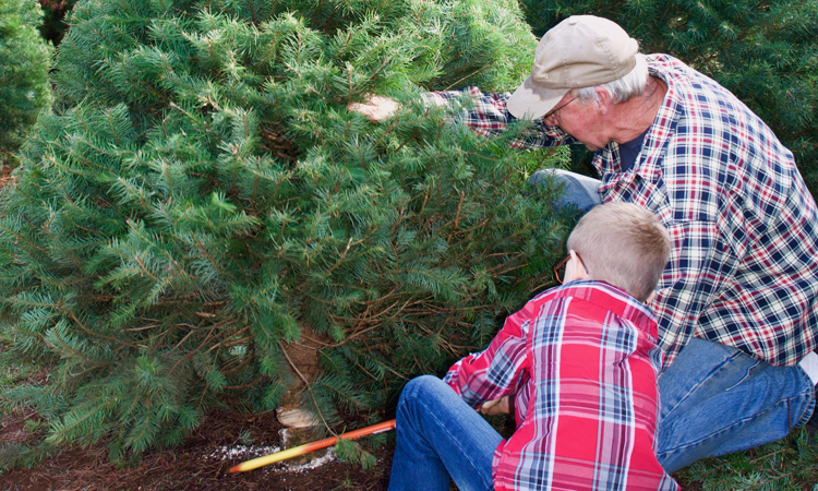 Family cutting down a Christmas tree